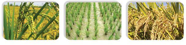 پخش عمده سموم کشاورزی
