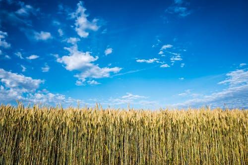 برترین فروشنده محصولات کشاورزی تابستان و بهار